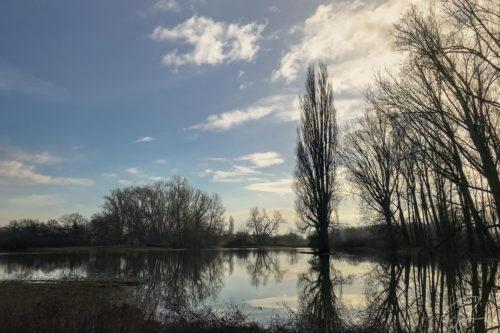 Rheinwiesen im Hochwasser mit Bäumen im Gegenlicht