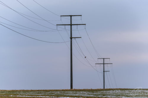Ein Vogel sitzt auf einer Stromleitung zwischen drei diagonal sichtbaren Strommasten